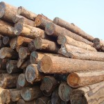 Tropical-wood-log